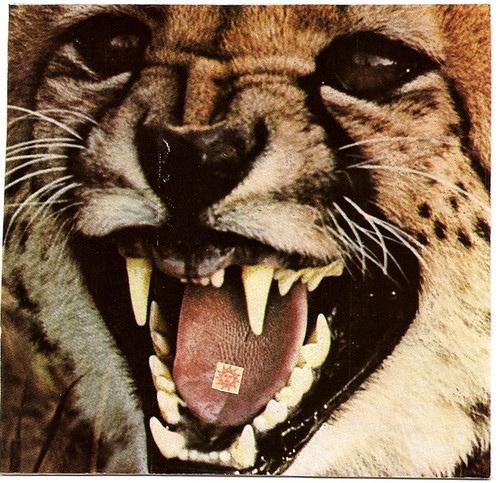 Meow ? Rawr?