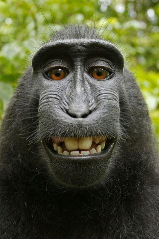 Monkey-Selfie-320