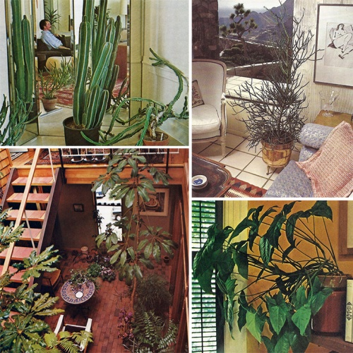 Decorating_With_Plants_2